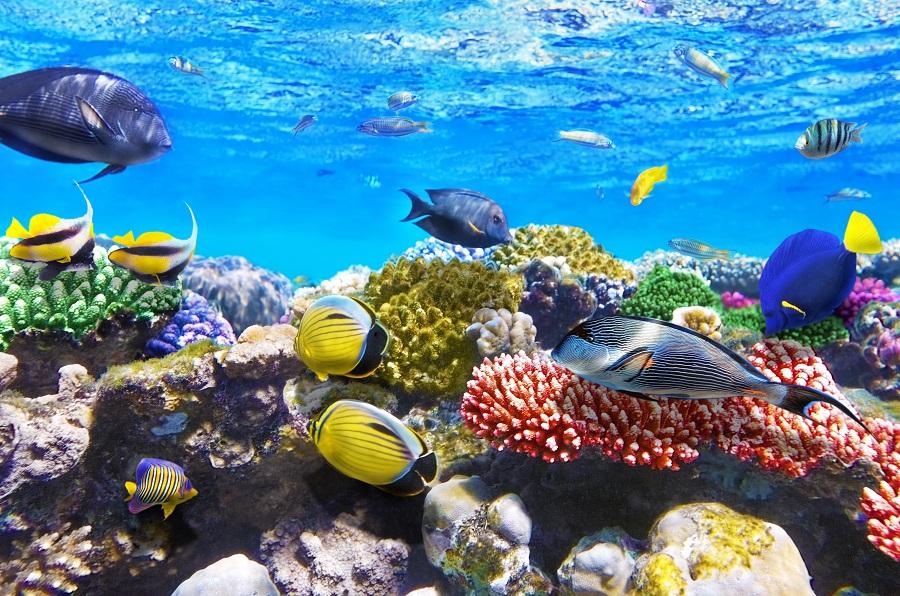 Кораллы и рыбки Красного моря
